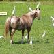 Zirgi un to dažādie draugi