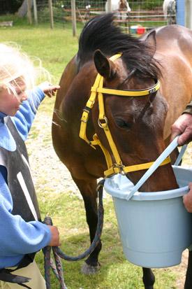 Karstā laikā ir būtiski zirgam nodrošināt pietiekamu šķidruma līmeni organismā.