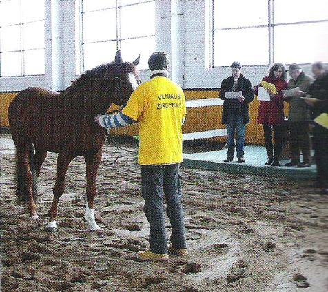 Lietuviešu-vācu komisija apskata traķēņu zirgus Viļņas zirgaudzētavas manēžā