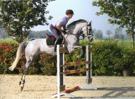 Lai arī leciena tehnika vēl nav pavisam noapaļota, taču te ķēve jau krietni labāk pievelk priekškājas, paver ganašas lecienā un saglabā vieglu kontaktu.