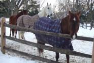 Ja zirgs ir slapjš, flīsa sega palīdzēs noņemt mitrumu no kažoka, vienlaikus pasargājot zirgu no apsaldēšanās.